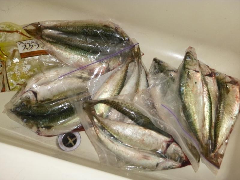 サバを東京湾で手軽に爆釣する