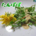 タンポポを野菜としてサラダで食べてみた