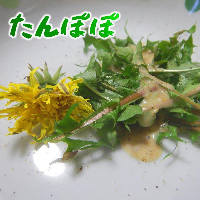 タンポポの野菜としての側面を知るべくサラダで食べてみた