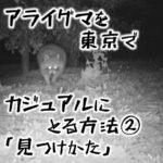 アライグマを東京でカジュアルにとる方法② アライグマはこうやって見つける